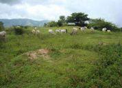 Finca ubicada en el sector don alonzo de la parroquia de cantagallo (md)