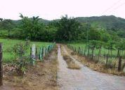 Venta de finca ganado lechero 60 hectareas