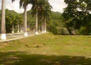 Parcela en el cementerio