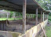 Venta de finca de 50 hectareas