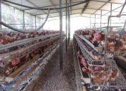 Venta de finca con gallinas ponedoras en jaula y para ceba de ganado