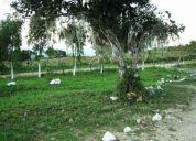 Se vende finca avicola en produccion.