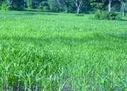 Vendo finca 2000 hectareas propias cadena titulativa