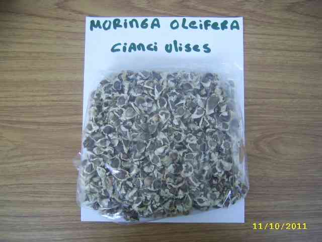 semillas moringa oleifera