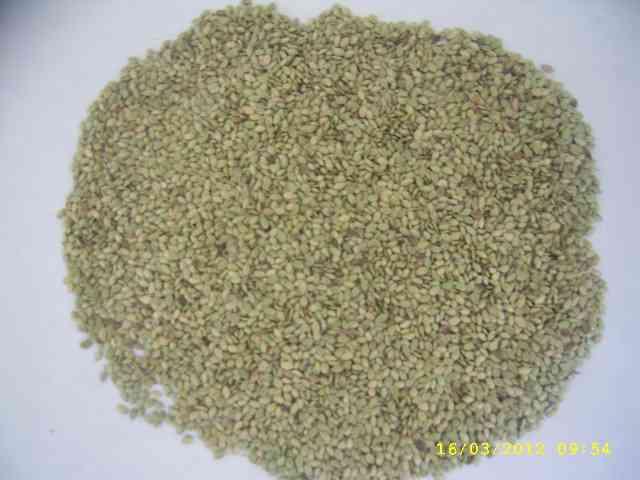 grama semilla en venezuela