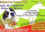 Cachorros poodle, rottweiler, pastores, golden, chihuahuas y jack russell