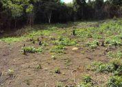 Vendo terreno en el junquito