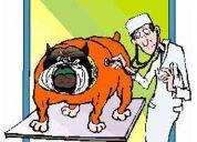 Médico veterinario a domicilio en barquisimeto