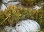 Biongenieria vetiver colombia y venezuela