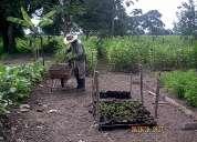 Vivero forestal en colombia y venezuela