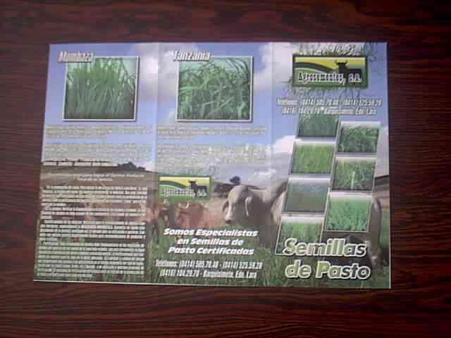 semillas pastos certificadas colombia y venezuela