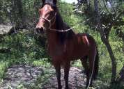 Se vende caballo