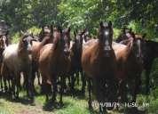 Vendo pie de cría de 30 caballos.