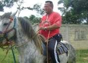 Vendo caballo rucio moro