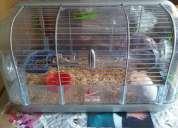 Vendo jaula para hamster con sus accesorios y si quiere con linda hamster incluida